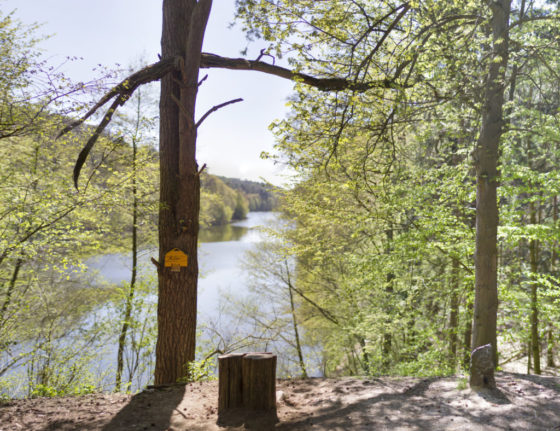 Malerblick am Mittelsee